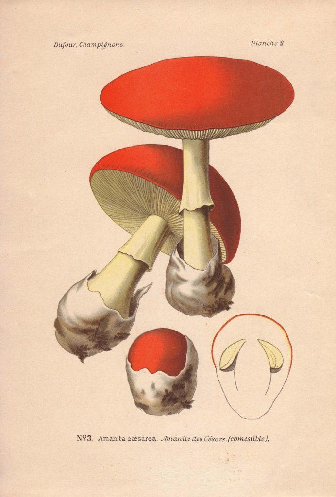 hongos en los pies