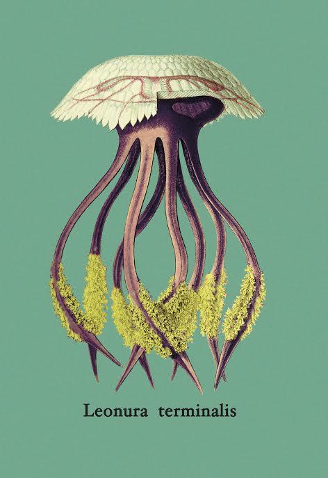 picadura medusa remedios