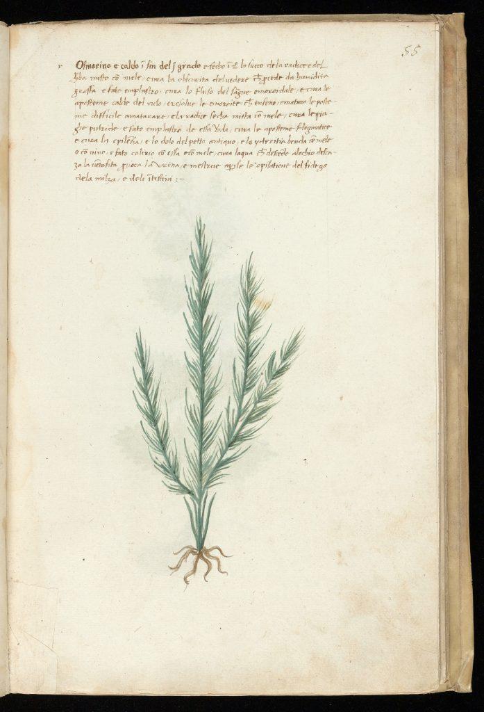 plantas medicinales embarazo