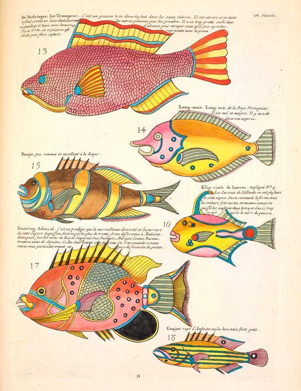 pez panga