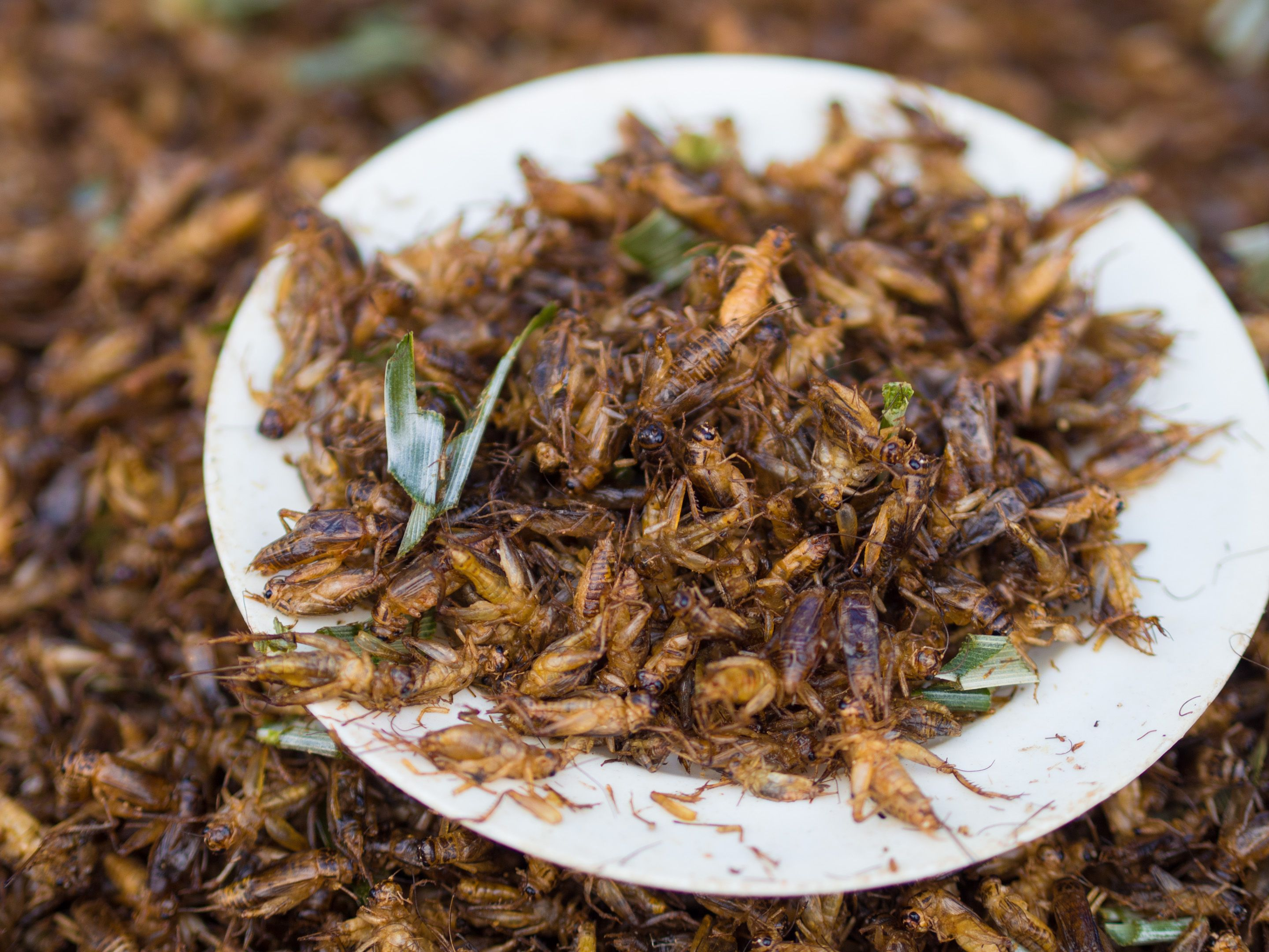 comer insectos legal